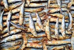 Brzdąc ryba Fotografia Stock