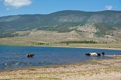 Brzeg Baikal jezioro Obrazy Stock