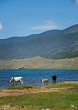 Brzeg Baikal jezioro Obraz Stock