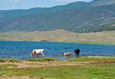 Brzeg Baikal jezioro Obraz Royalty Free