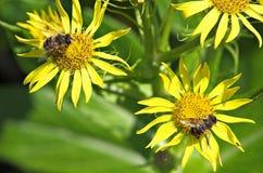 Brzeg denni kwiaty Obraz Stock