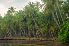 Brzeg i Kokosowi drzewa zdjęcia stock