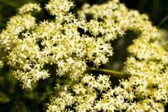 Brzeg jeziora Ca kwiaty zdjęcie royalty free