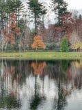 Brzeg jeziora lustro Zdjęcie Stock