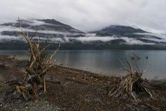 Brzeg jeziora przy Jeziornym Wanaka, Nowa Zelandia zdjęcie royalty free