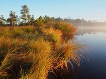 Brzeg jeziora w Kakerdaja bagnie Obraz Royalty Free