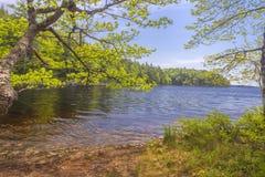 Brzeg jezioro Zdjęcia Royalty Free