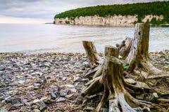Brzeg jezioro michigan Obraz Royalty Free