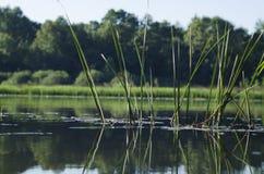 Brzeg jezioro w lecie obrazy royalty free