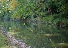 brzeg rzeki Obraz Royalty Free