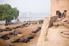 Brzeg rzeki, Agra, ind Zdjęcie Stock