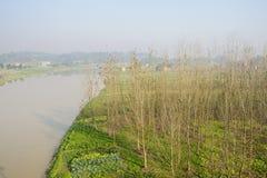 Brzeg rzeki kultywował warzywa i drzew w pogodnym zima ranku Zdjęcia Stock