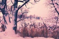 Brzeg zamarznięty jezioro obraz stock