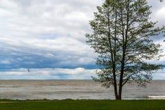 Brzeg zatoka Finlandia podczas złej pogody w Peterhof, Rosja Obrazy Royalty Free