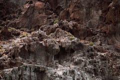 brzegowa Gomera losu angeles lawy skała Zdjęcia Royalty Free