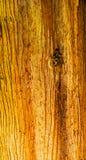 Brzegowego Redwood Wysokiego drzewa Prawdziwa sekwoja Sempervirens Zdjęcia Royalty Free