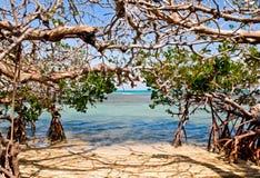 brzegowy namorzynowy morze zdjęcia stock