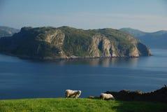 brzegowy norweg Obrazy Stock