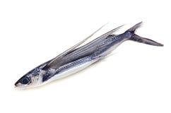 brzegowy rybi latanie Zdjęcie Royalty Free