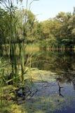 brzegu rzeki Zdjęcie Stock