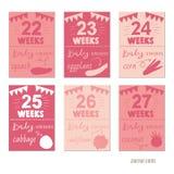 Brzemienność 22-27 tygodnia projekta Wektorowych szablonów dla czasopismo kart, Zdjęcie Royalty Free