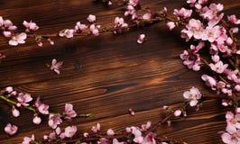 Brzoskwini okwitni?cie na starym drewnianym tle Owoc kwiaty fotografia royalty free