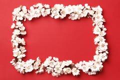 Brzoskwini piękny różowy okwitnięcie kwiatonośny brzoskwini drzewo na czerwonym tle obraz stock