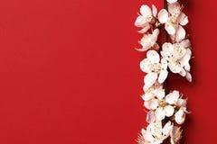 Brzoskwini piękny różowy okwitnięcie kwiatonośny brzoskwini drzewo na czerwonym tle fotografia stock