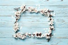 Brzoskwini pi?kny r??owy okwitni?cie kwiatono?ny brzoskwini drzewo na b??kitnym drewnianym tle obraz stock