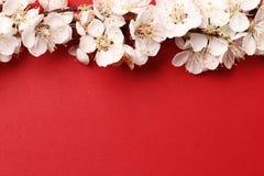 Brzoskwini pi?kny r??owy okwitni?cie kwiatono?ny brzoskwini drzewo na czerwonym tle obrazy stock