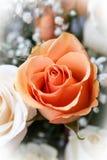 Brzoskwini róży kwiat zdjęcie royalty free