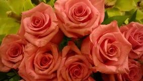 Brzoskwini róże Zdjęcie Royalty Free