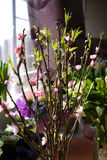 Brzoskwinia kwiat Obraz Stock