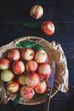 brzoskwinie czerwone Fotografia Stock