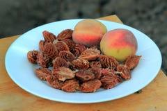 Brzoskwinie i brzoskwini nasiona na talerzu Obrazy Royalty Free