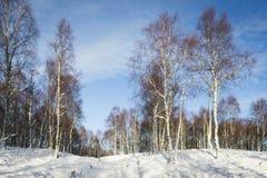 Brzoz drzewa w śniegu w średniogórzach Szkocja Zdjęcia Royalty Free