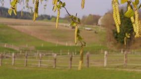 Brzoza akselbantów blisko gospodarstwo rolne ono fechtuje się przy wiosną, w górę target136_1_ zbiory