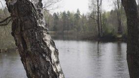 Brzoza bagażnik na brzeg rzekim zbiory wideo