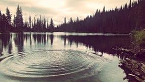 Brzoza jezioro Obraz Stock