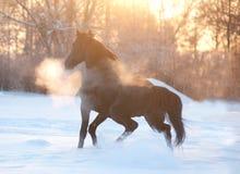 Brzoza las w zimie w czarny i biały Obraz Royalty Free