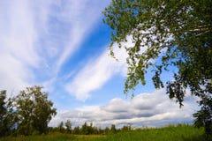 Brzoza na nieba tle z chmurami obrazy stock