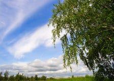 Brzoza na nieba tle z chmurami obraz stock