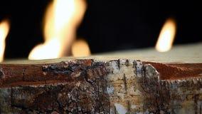 Brzoza ogienia płomienia HD materiał filmowy zbiory
