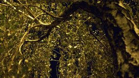 Brzoza rozgałęzia się w świetle latarni ulicznej zdjęcie wideo