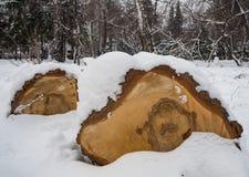 Brzozy łupka pod ostatnio spadać śniegiem w Novosibirsk, Rosja obraz royalty free