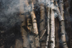 Brzozy łupka wolno zaświeca up i dymi Fotografia Stock