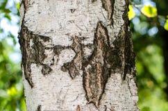 Brzozy barkentyny tekstury tła papier Zdjęcia Stock
