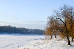 Brzozy blisko śnieżystego jeziora obraz royalty free