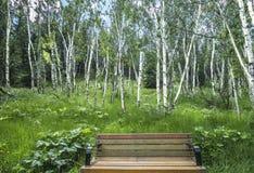 Brzozy drzewa łąka obrazy stock
