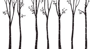 Brzozy drzewa sylwetki tło Zdjęcie Stock